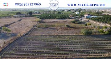 GRUPO NEXUS REAL ESTATE SELLS RUSTIC LAND