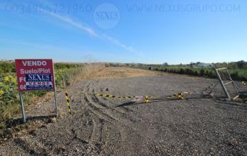 INMOBILIARIA GRUPO NEXUS SELLS RUSTIC LAND IN LO PEDREÑO SAN FULGENCIO in Nexus Grupo
